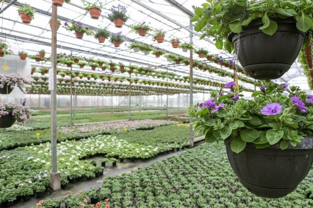 Voorjaar perkplanten voor in de tuin